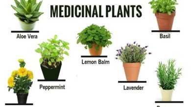 Photo of 10 beneficial medicinal plants for the pancreas