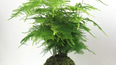 Photo of Kokedama Care: [Earth, Moisture, Pruning and Problems]