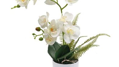 Photo of White Orchid Care: [Dirt, Moisture, Pruning and Problems]