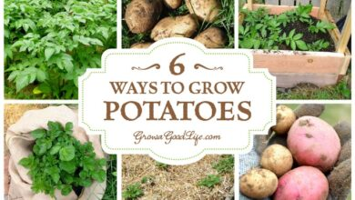 Photo of 6 different ways to grow potatoes