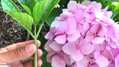 Photo of 8 ways to multiply or reproduce the plants of your garden and garden