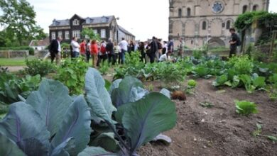Photo of Urban Agriculture in Germany. Urban gardens in Andernach and Berlin