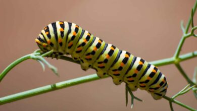Photo of Caterpillars in the Garden: What are they? How do we identify them? How do we fight them?