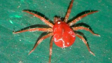 Photo of The Red Spider: What is it? How do we identify it? How can we fight it?