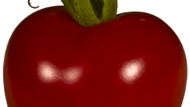 Photo of Kumato Tomato: [Sowing, Care, Irrigation, Substrate and Pests]