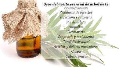 Photo of 35 uses of tea tree essential oil