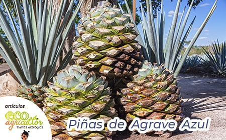 agave properties