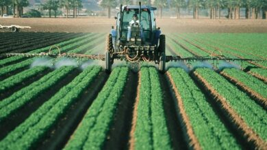 Photo of Subsistence Agriculture: [Concept, Functioning, Advantages and Disadvantages]