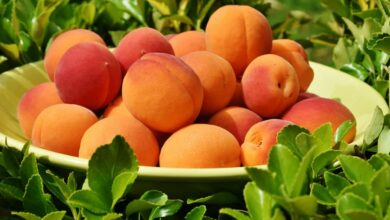 Photo of 9 Types and Varieties of Apricots You Will Want to Try