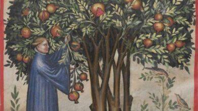 Photo of Pomegranate tree