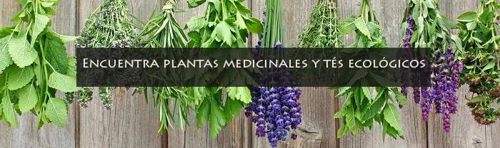 ecological medicinal plants