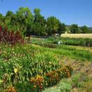 biodiversity agriculture