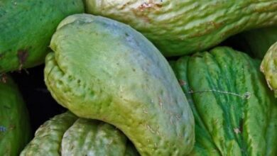 Photo of Chayote Pests and Diseases: Complete Guide with Photos