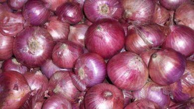 Photo of Tropea onion