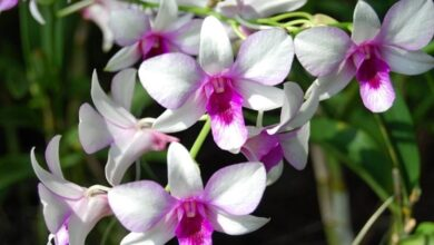 Photo of Orchid cultivation