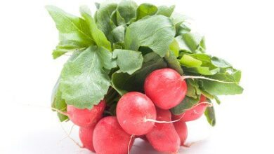 Photo of THE RADISH: The most important pests and diseases