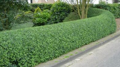 Photo of Hedge cost