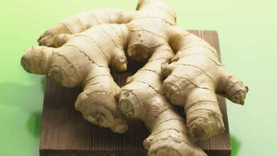 Photo of Sowing Ginger in your Garden: [Care, Irrigation and Substrate]