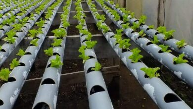 Photo of Hydroponics or Hydroponic Culture: [Concept, Characteristics and Use]