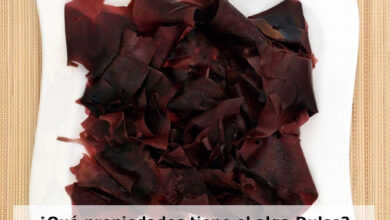 Photo of Dulse seaweed: What it is, properties, how it is used in recipes and precautions when consuming it