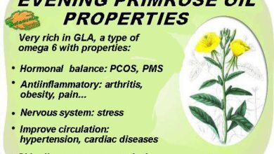 Photo of Evening Primrose Oil or Primrose: properties, benefits of its use and contraindications