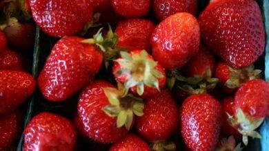 Photo of Climbing strawberries
