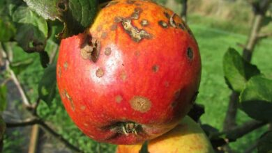 Photo of Homemade Fungicide: [How to Prepare and 5 Examples]