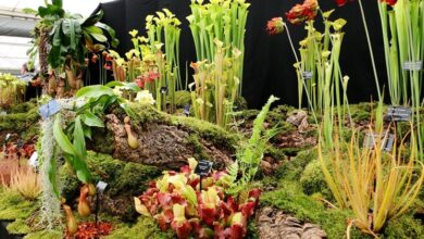 Photo of Carnivorous plant games