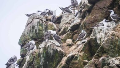 Photo of Guano: [Fertilizer, Benefits, Nutrients and How to Prepare it]