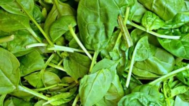 Photo of Spinach Diseases: Leaf Spots, Viruses, and More