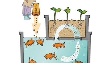 Photo of Aquaponics or fish farming. What it is, how it works and advantages