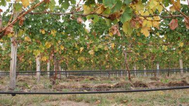 Photo of DIY irrigation system