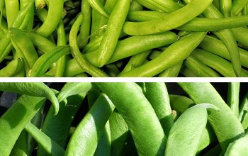 Photo of Judías verdes, vainas o ejotes, propiedades y beneficios para la salud