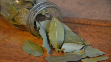 Photo of Laurel cuttings: [Grafting, Season, Rooting and Sowing]