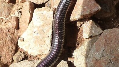 Photo of Earthworms: What are they? How to raise them? How are they used?