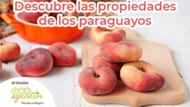 Photo of Paraguayan, one of the fruits that take care of us during the summer. Have you tried this flat peach yet?