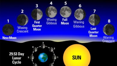 Photo of Phases of the moon most suitable for each activity in the garden