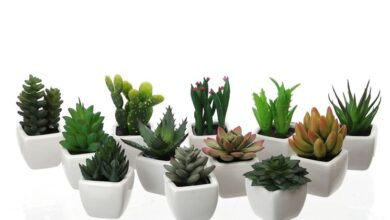Photo of Fake succulents