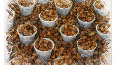 Photo of How to Plant Tigernut: Planting Method in a [Complete Guide]