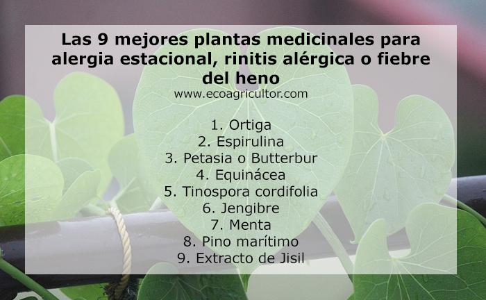rhinitis medicinal plants