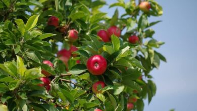 Photo of Apple Tree Diseases and Pests: [Identification and Treatment]
