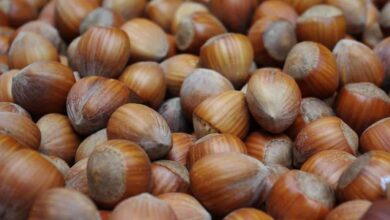 Photo of How to Plant a Hazelnut and Harvest Your Own Hazelnuts: [Complete Guide]