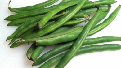 Photo of How to Plant Green Beans: Complete Guide [Steps to Follow + Images]
