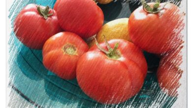 Photo of How to Fertilize Tomatoes: [Utility, Date, Products and Homemade Forms]