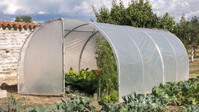 Photo of Vegetable greenhouses