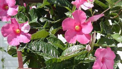 Photo of Sundevilla