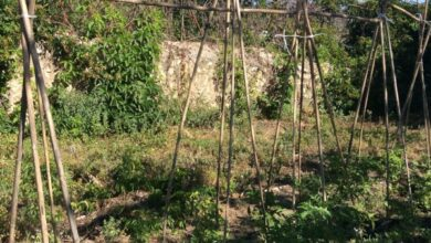 Photo of How to go from a conventional garden to an organic garden