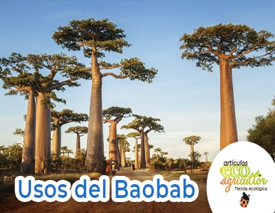 uses of baobab