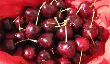 Photo of Cherry variety
